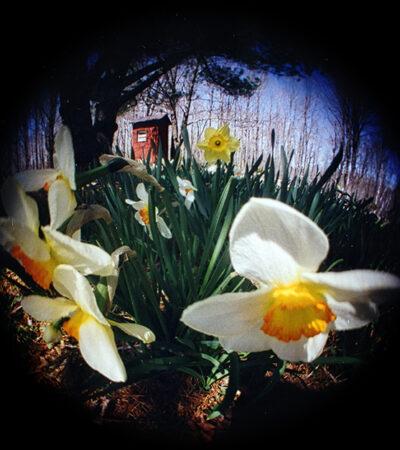 flowers_editMD